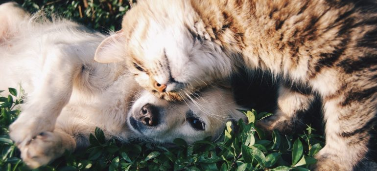 A dog and a cat representing a behavior that you can expect when relocating with pets.