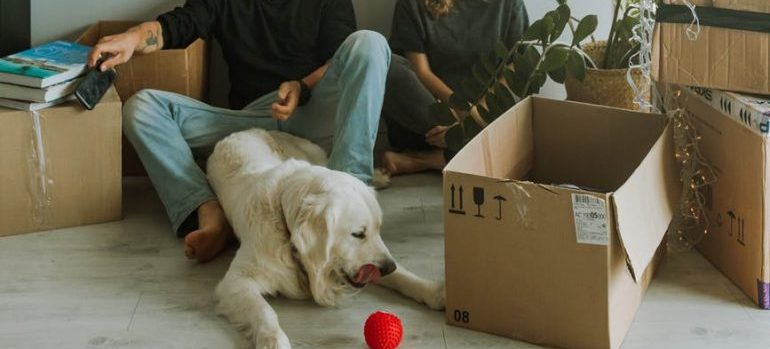 people moving with pets to Manchester