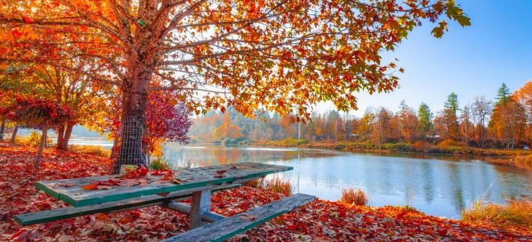 Autumn vibes and colorful leaves in the nature.